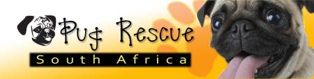 Pug Rescue South Africa