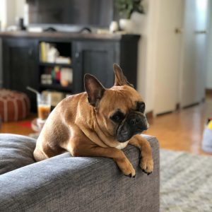 free dogini dog ramp resources