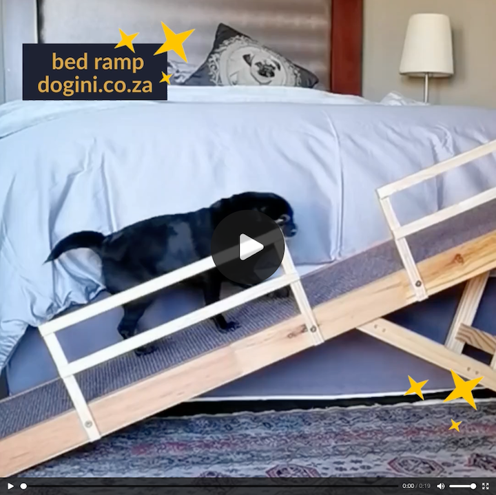 Dogini Online Store providing pet owners with Ramps, Strollers, Prams & other items to protect spines and joints